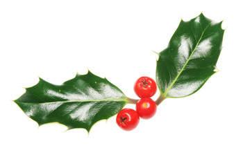Two holly leaves and berries isolated on white