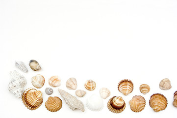Different shells on white