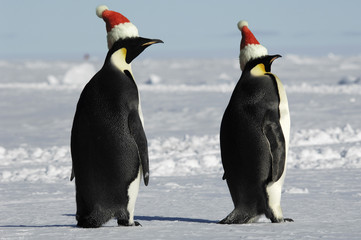 Antarctic penguin pair at Christmas day