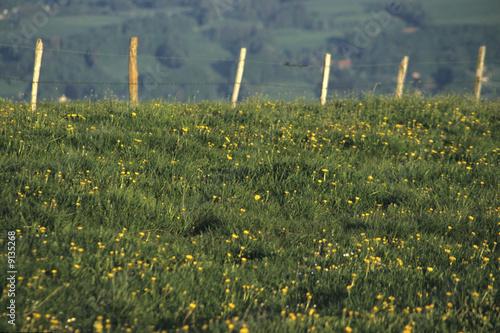 Alpages du sal ve fleurs jaunes et clot re haute savoie 74 photo libre de droits sur la for Cloture de jardin haute savoie