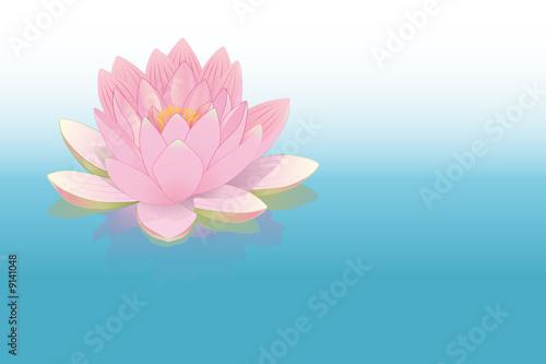 """fleur de lotus rose posée sur l'eau"""" stock image and royalty-free"""