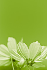 green flower - environmental conservation - vertical picture