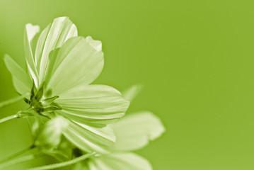 green flower - environmental conservation