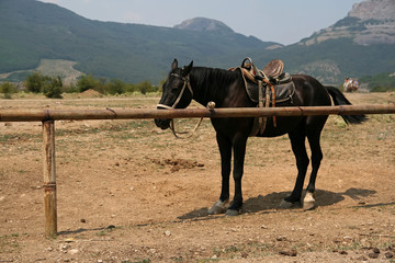 Photo of horse in a farm with mountain in background