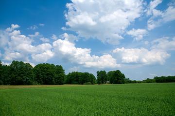 Summer landscape background texture