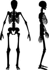 silhouettes of human skeleton