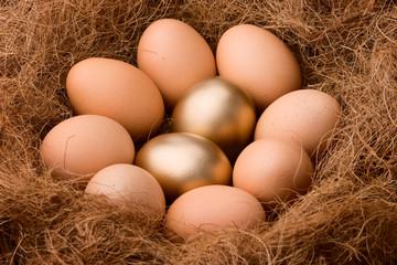 Two golden eggs between eight regular ones