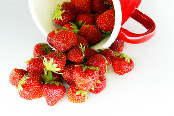 Red strawberries on white background out of  the pot
