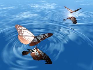 papillon et rond sur l'eau
