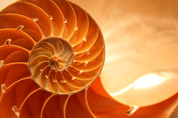 Split nautilus seashell showing inner float chambers