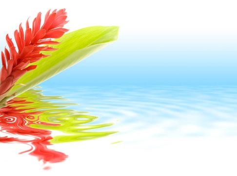 Fleur tropicale d'Alpinia avec reflet