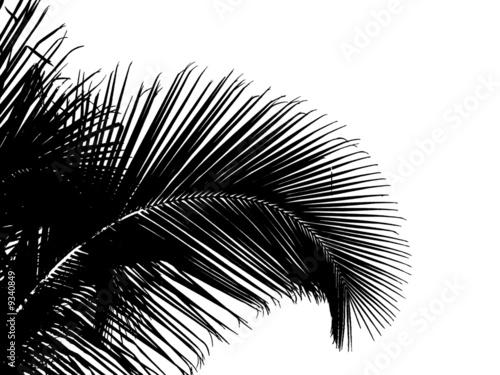 Palmier noir sur fond blanc photo libre de droits sur la - Dessin fond noir ...