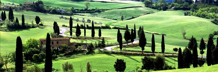 S Kurve,Zypressenallee,Toskana,Val d Orcia,Monticchiello,Italien