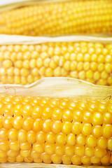 Freshly harvested corn closeup