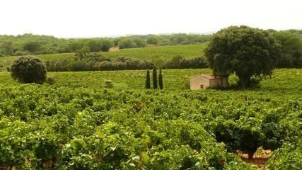 Cabannon dans les vignes