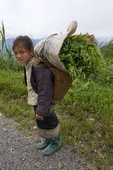 Hmong transportiert Gemüse ins Tal, Laos