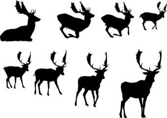 buck deer silhouette, vector collection