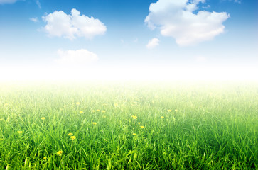 Fresh nature background. Grass with little yellow flowers
