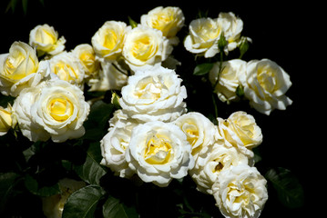 Spoed Fotobehang Macro flowers