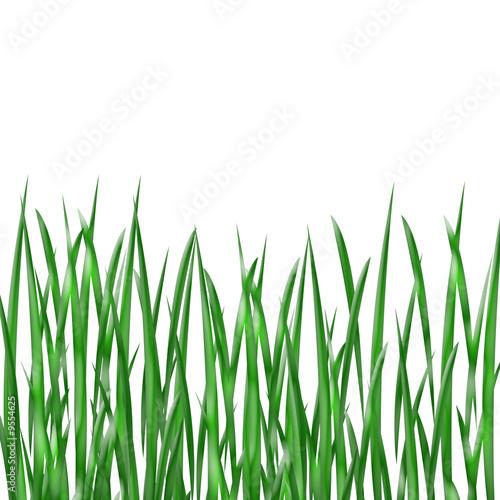 brins d 39 herbe photo libre de droits sur la banque d 39 images image 9554625. Black Bedroom Furniture Sets. Home Design Ideas