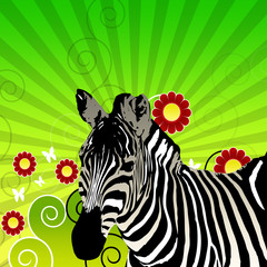 Illustration Zebra mit grünen Hintergrund