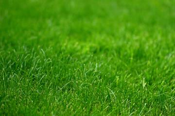 background gradual blur grass