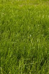 Large field. Focus on grass