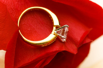 Wedding ring on the petal of red rose