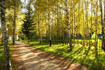 Autumn alley.Green grass, yellow leaves.