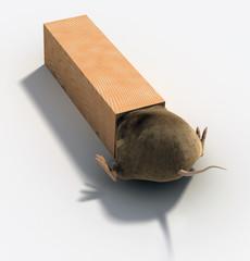 Rat Caught
