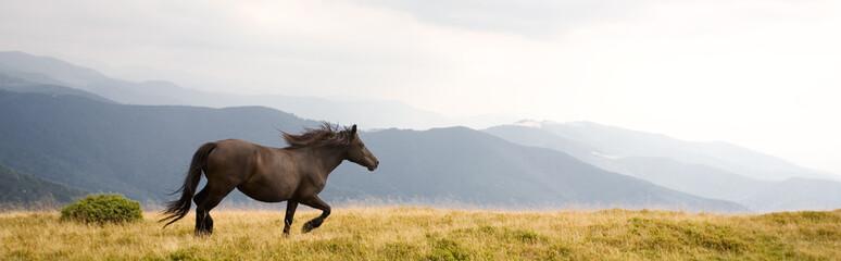 Fototapeta Black stallion