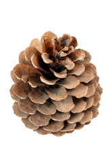 Cone isolated on a white background