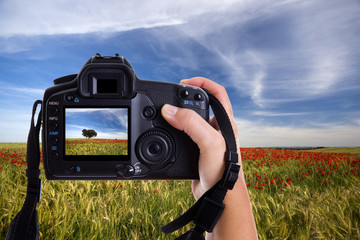 hand holding digital photo camera and taking landscape photo