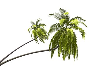 a palmtree isolated on white background