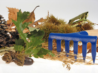 Blue rake with autumn leafs and fruit