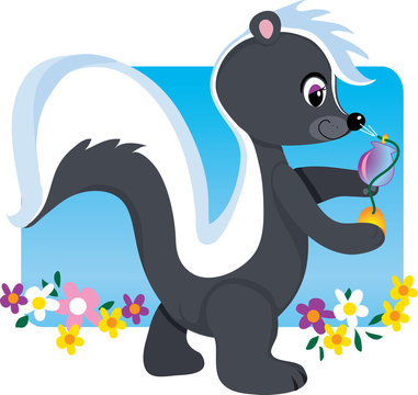 A cute little female skunk spraying herself with perfume