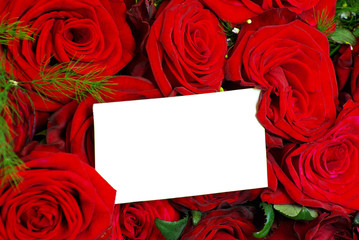 message on a  rose  background
