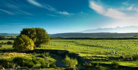 Panoramic view of rural scenery, fiordland, new zealand.