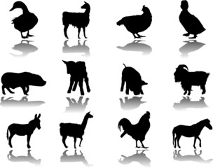 Set Animals. Vector. Similar works are in my galleries