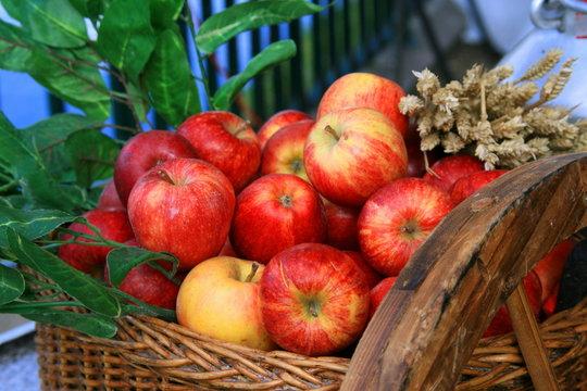Saison des pommes