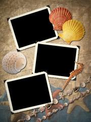 Frameworks for a photo, sea cockleshells.