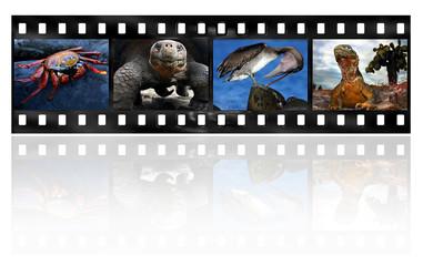 Galapagos Remembrance