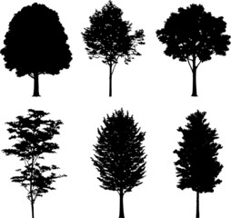 Set isolated trees. Silhouettes