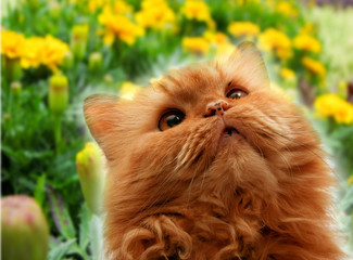 Cute cat on flowers background