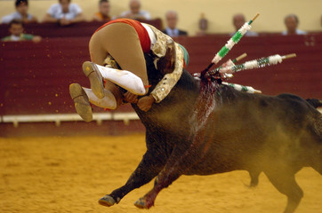 Photo sur Toile Corrida bullfight