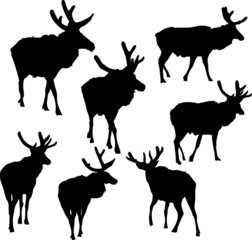 seven deer silhouettes