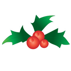 holly berries vector design element