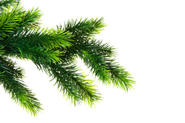 Close up of fir tree branch isolated on white