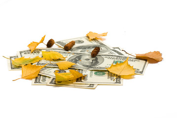 pack of dollars of the USA and birch leaves