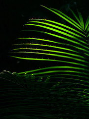 The sun shining through the leaves of palm leaves in the jungle